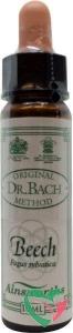 Ainsworths Beech Bach