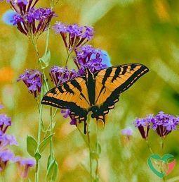 Animal Essences Butterfly (vlinder)